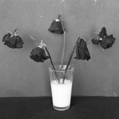 Черно-белый мир в фотографиях Thomas Hauser
