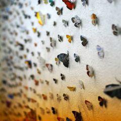 Полеты бабочек