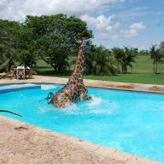 Фотографии жирафа