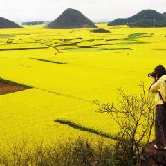 Красивые желтые поля в Китае