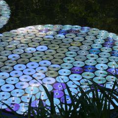 Кувшинки из компакт-дисков