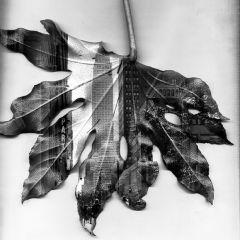 Нью-Йорк на осенних листьях