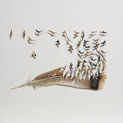 Творчество из птичьих перьев