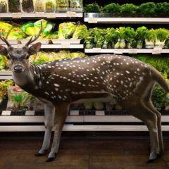 Животные в супермаркете
