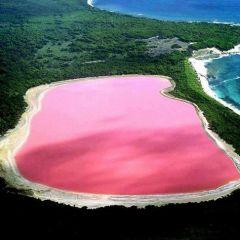 «Розовое» чудо света