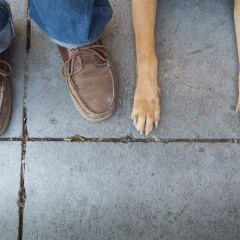 Ноги и лапы