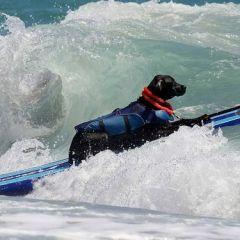 Собака-серферы