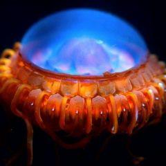 5 НЛО из подводного мира