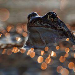 Красивые лягушки в вечернем свете