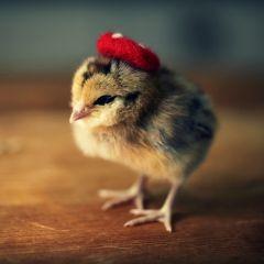 Головные уборы для птенцов