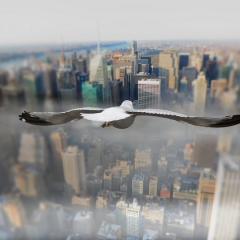 Птицы, кружащие над землей