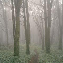 Туманные фотографии Vasantha Yogananthan