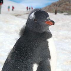 Дружелюбный пингвин