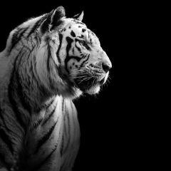 Черно-белые фото животных