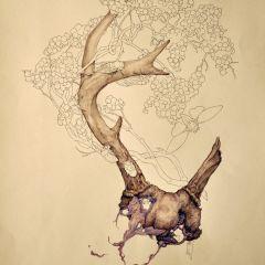 Иллюстрации Lauren Marx