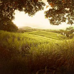 Маврикий в фотографиях Atelier Olschinsky