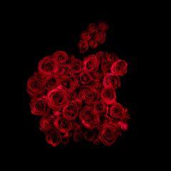 Известные логотипы, выложенные розами
