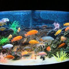 Услуги по обслуживанию аквариумов на biotopimage.ru