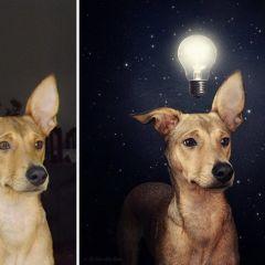 Фотограф помогает животным найти дом