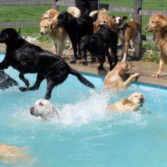Бассейн для собак