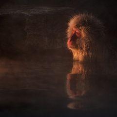 Задумчивые обезьянки