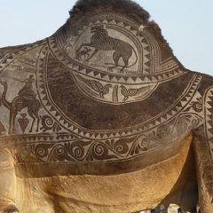 Верблюжьи узоры
