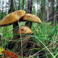 Какие грибы нужно собирать?