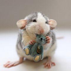 Мимимишные крыски