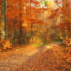 Пейзажи осени