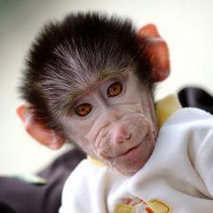 Маленькая обезьянка из зоопарка Скопье