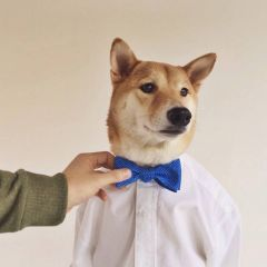 Собака-модель зарабатывает 15000 долларов в месяц