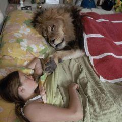В 1970-х годах лев жил с актерами несколько месяцев