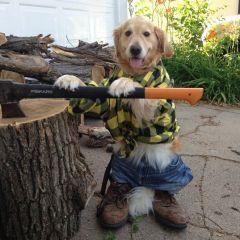 Собака, имитирующая поведение человека