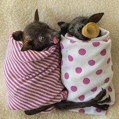 Приют для маленьких летучих мышей