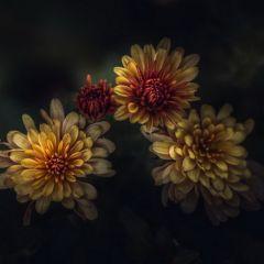 Цветы Paul Barson