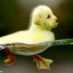 Птицебака — гибрид птицы и собаки