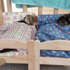 Кровати для кошек
