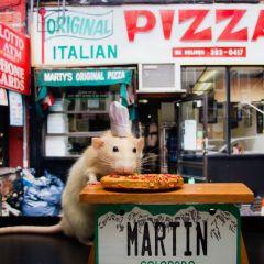 Очаровательная мышка по имени Мартин