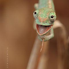 Такие милые ящерицы