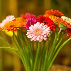 11 советов о том, как выбрать лучшие цветы