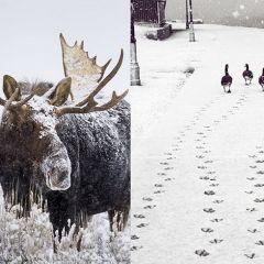 Зимние животные