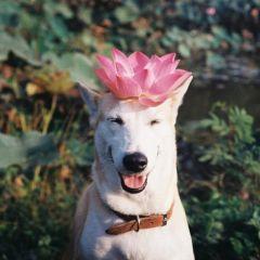 Глюта — по-настоящему счастливая собака