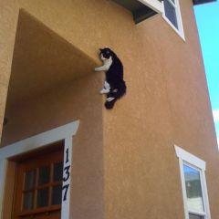 Ниндзя-кошки, которые могут все