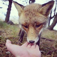 Фотографии животных Konsta Punkka