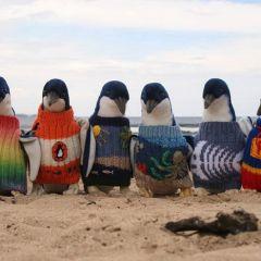 109-летний мужчина вяжет свитера для пингвинов