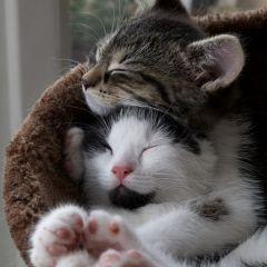25 кошачьих обьятий
