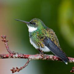 15 самых красивых видов колибри