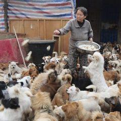 Пожилые китаянки спасают жизни тысячам собак