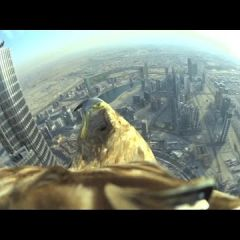 Полет орла с башни Бурдж-Халифа, снятый на GoPro