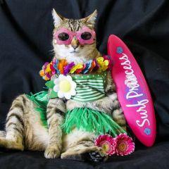 Кошка-модница демонстрирует различные стили в одежде
